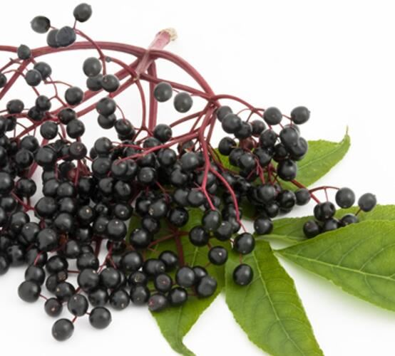 black elderberry extract benefits