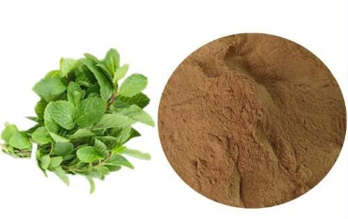 Organic Peppermint Extract-1