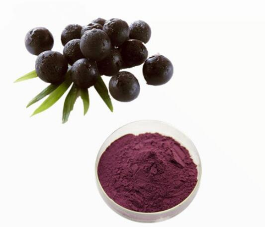 Black Elderberry Extract-1