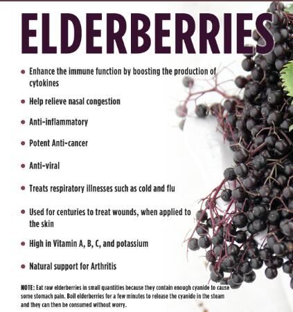 Elderberry Extract Powder Benefits.jpg