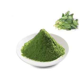 Spinach Extract Powder-1
