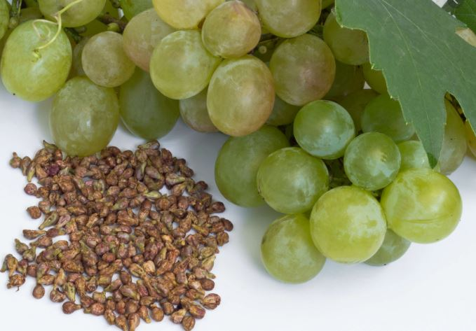 Organic Grape Seed Powder Benefits