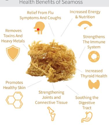 Irish Sea Moss Powder Benefits