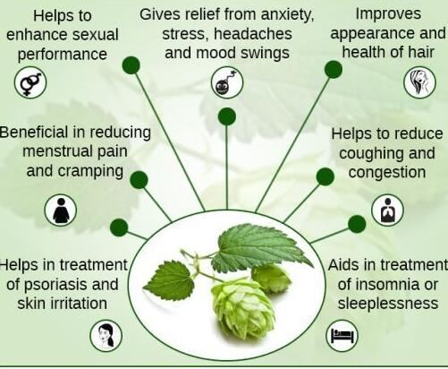 hops benefits