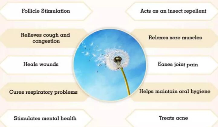 Dandelion Root extract benefits