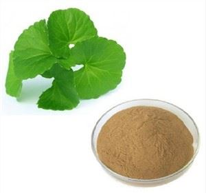 Gotu Kola Extract Powder