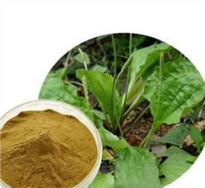 Plantain Leaf Powder
