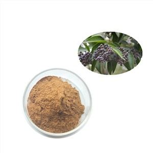Privet Fruit Extract