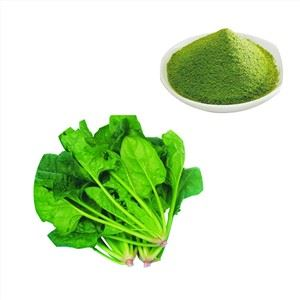Spinach Extract For Weight Loss