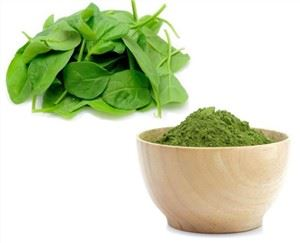 Spinach Extract Gnc