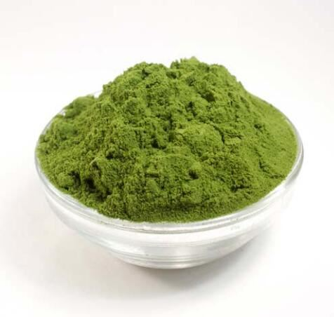 Barley Grass Juice Extract Powder