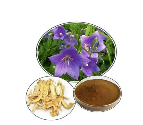 Bellflower Extract