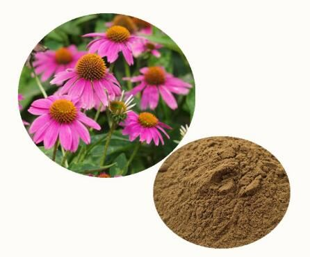 Coneflower Powder