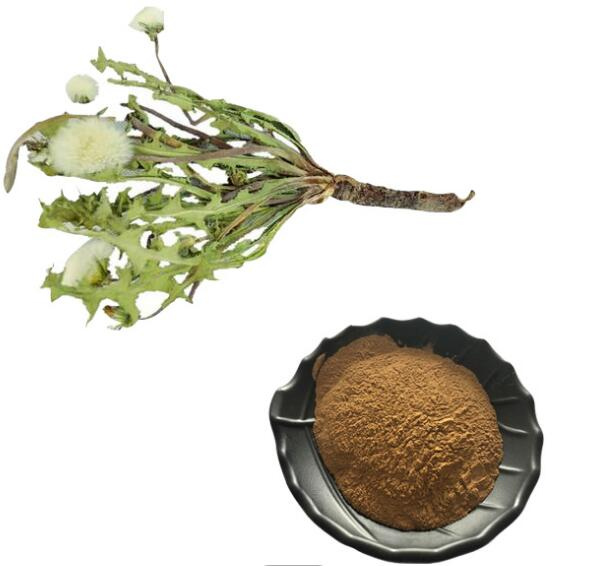 Dandelion Leaf Extract