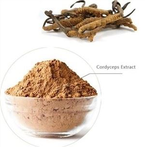 Cordyceps Powder Bulk