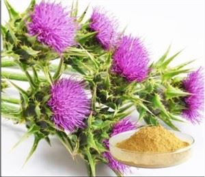 Milk Thistle 80 Silymarin