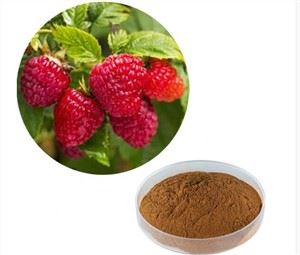 Raspberry Ketone Powder