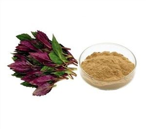 Red Spinach Extract