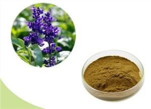 Salvia Officinalis Leaf Extract